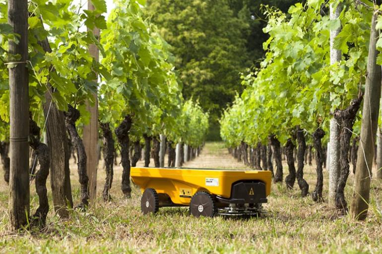 Vitirover est un robot tondeur viticole pour maitriser l'enherbement de la vigne et de l'agriculture