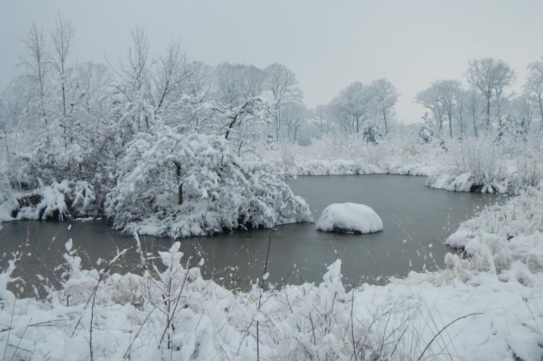 Dans la forêt à Saint-Lyé-la-Forêt (Loiret) sous la neige le mercredi 7 février 2018