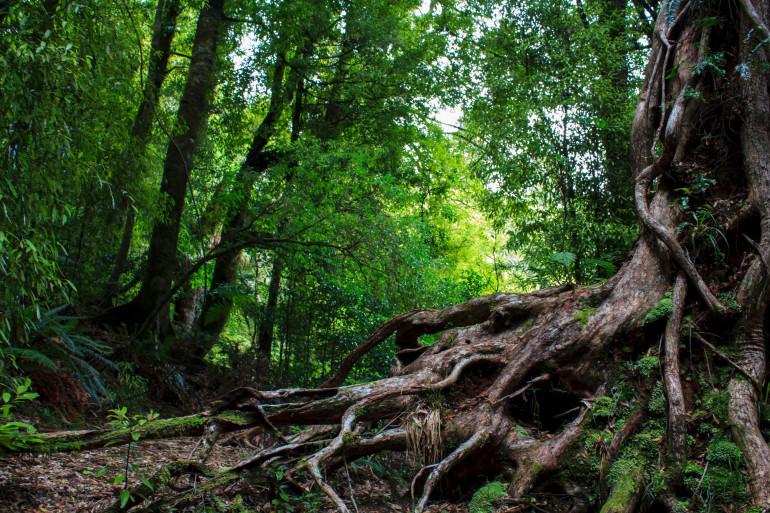 Est-ce possible de nous sentir mieux grâce aux arbres ?