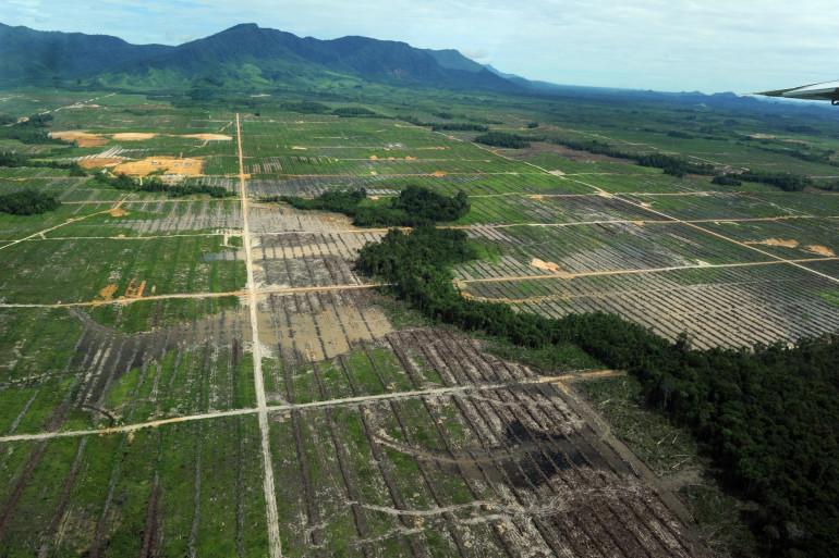 Une vue aérienne d'une plantation d'huile de palme, en Indonésie