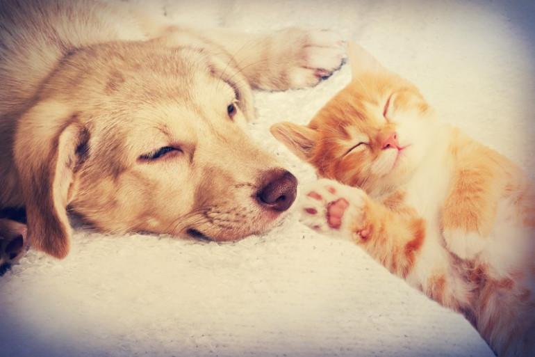 Peut-on aimer un animal aussi fort qu'un être humain ?
