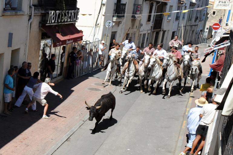 Un lâcher de taureaux à Pérols en 2011