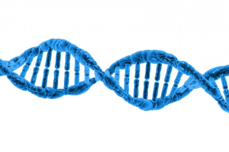 Une double hélice d'ADN (illustration)