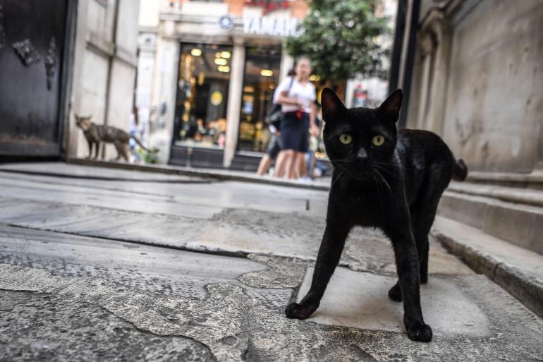 Un chat dans une ruelle (illustration)