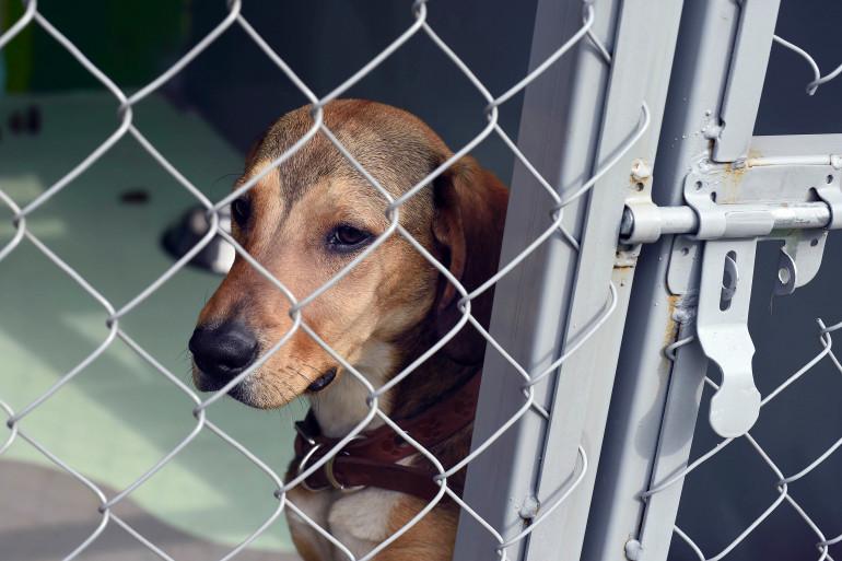 Un chien dans un refuge (Illustration).