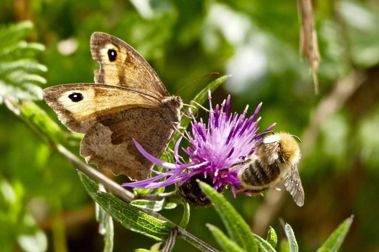 Les insectes menacés d'extinction d'ici un siècle