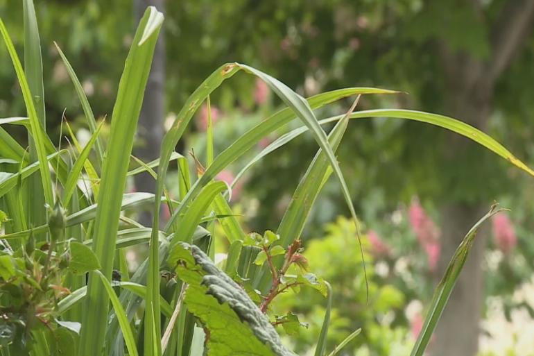 Paris : des végétaux à la place du bitume