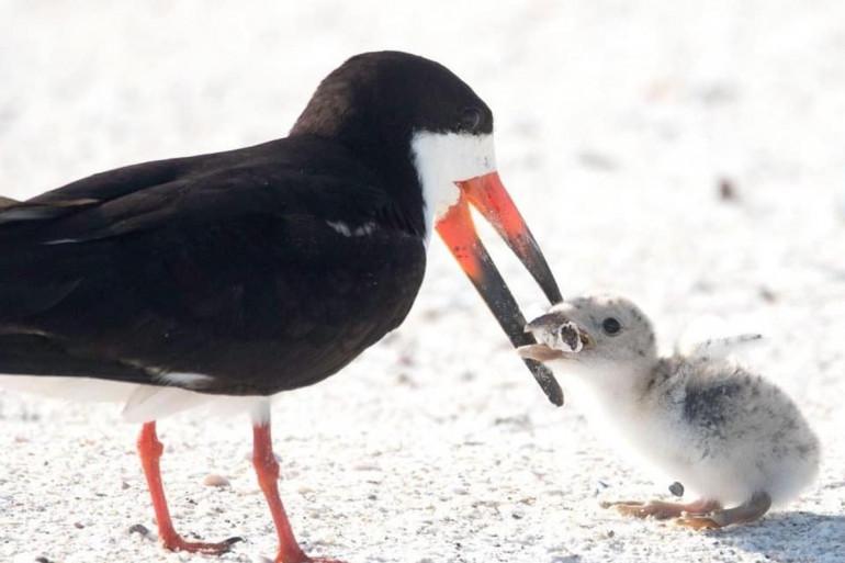 Un oiseau nourrit son petit avec un mégot de cigarette