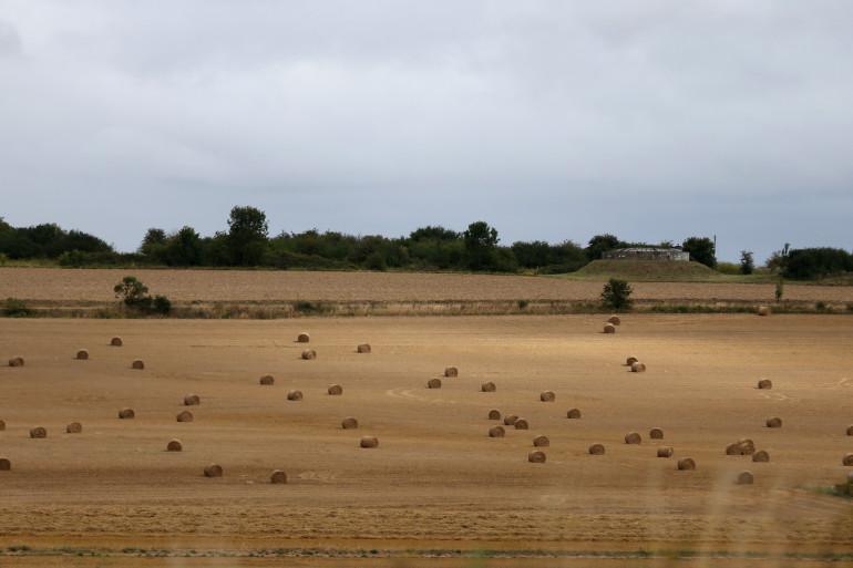 Des bottes de foin dans un champs (illustration)