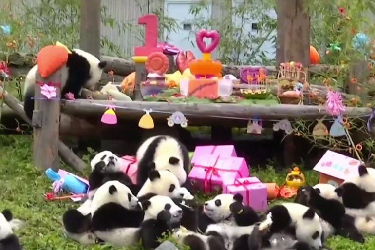 Une panda party