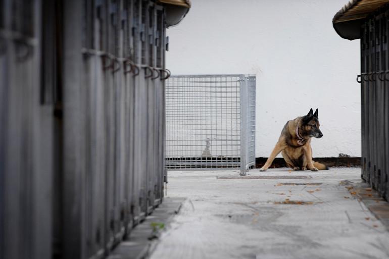 Un chien abandonné, récupéré dans un refuge de la SPA