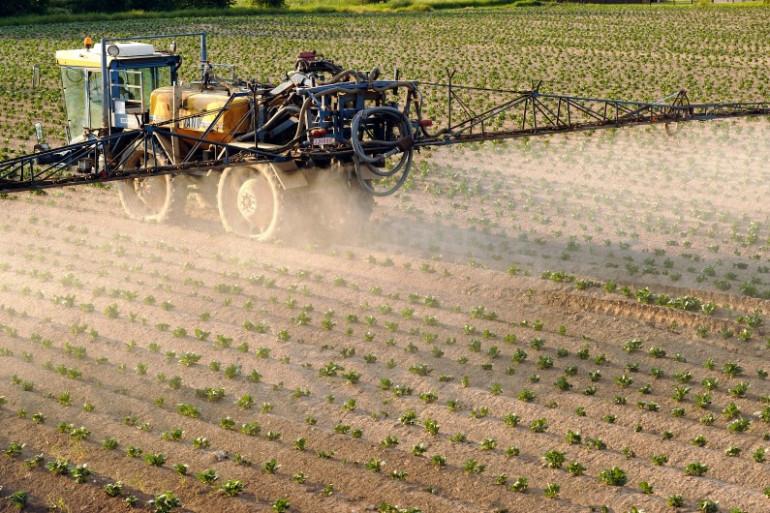 Des pesticides sont versés sur un champ de pommes de terre (illustration)