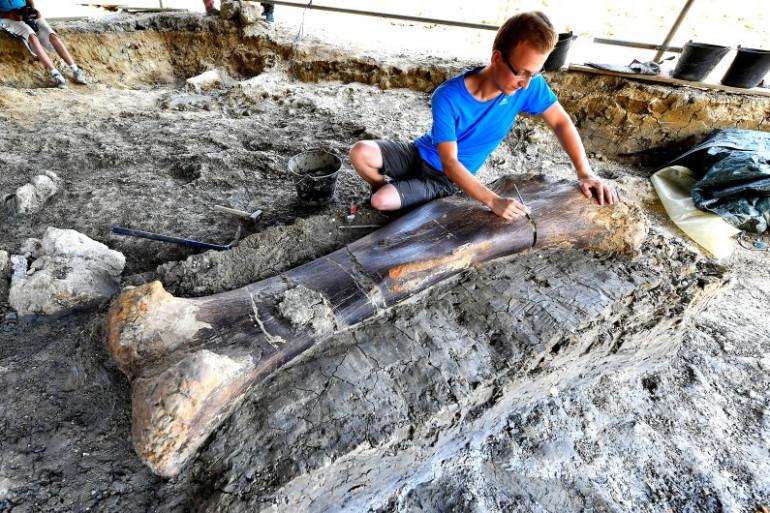 Charente : Un fémur géant de dinosaure sorti de terre