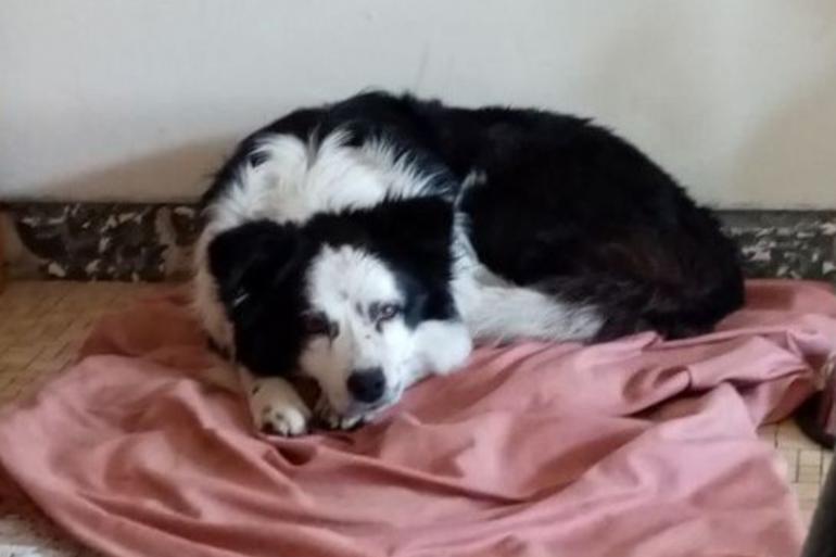 Pascal et son chien vivaient ensemble depuis 5 ans