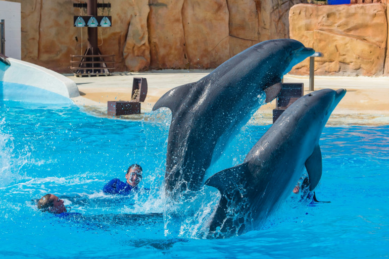 Des dauphins au parc Astérix (illustration)