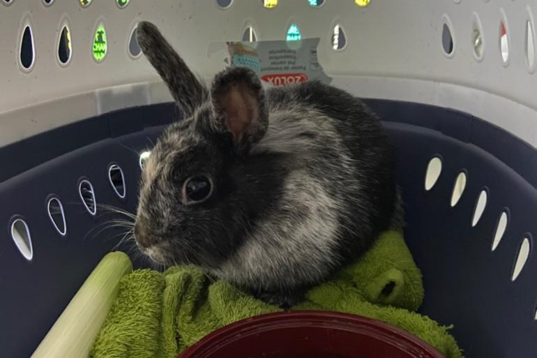 Un lapin a été retrouvé dans un TER
