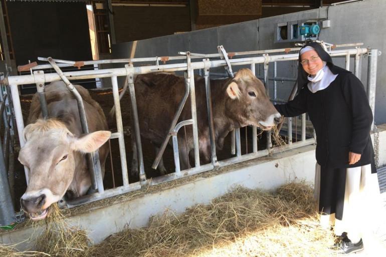 Une soeur avec ses vaches