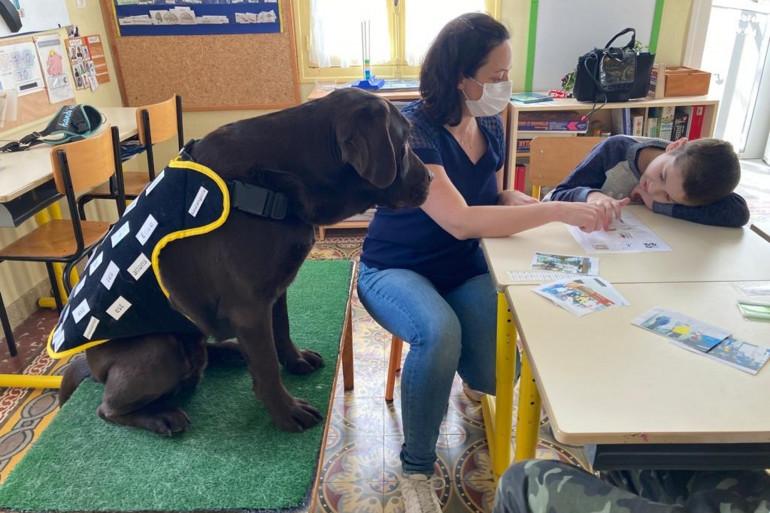 Un labrador aide des enfants autistes à Albi