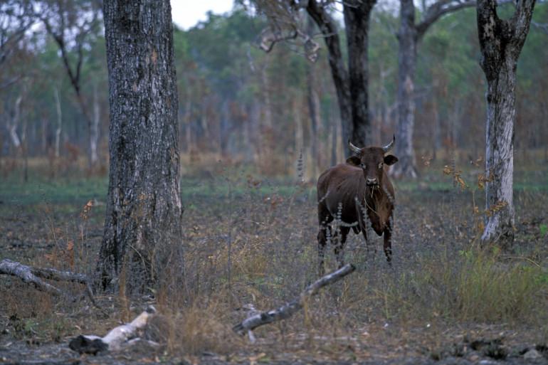 Si l'on regarde le pourcentage de mammifères sur la Planète : 77% concernent le bétail élevé par et pour l'Homme, 30 % correspondent aux êtres-humains et 3% seulement concernent les animaux sauvages.