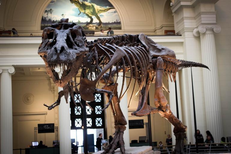 Un squelette de tyrannosaure (illustration)