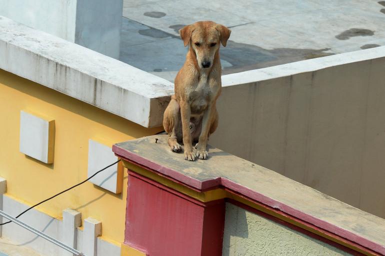 Un chien sur un mur (illustration).
