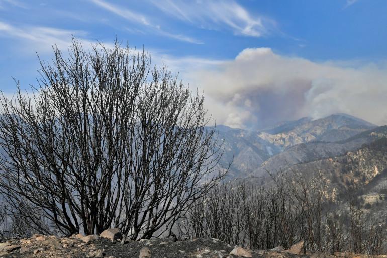 La forêt d'Angeles, en proie à de violents incendies