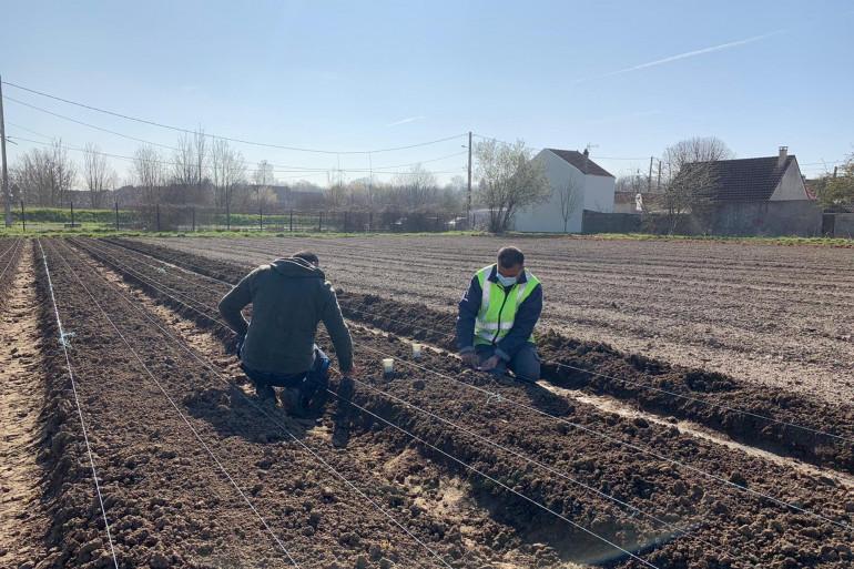 A Sevran en région parisienne, l'association Aurore produit des fruits et des légumes depuis 24 ans dans des jardins biologiques.