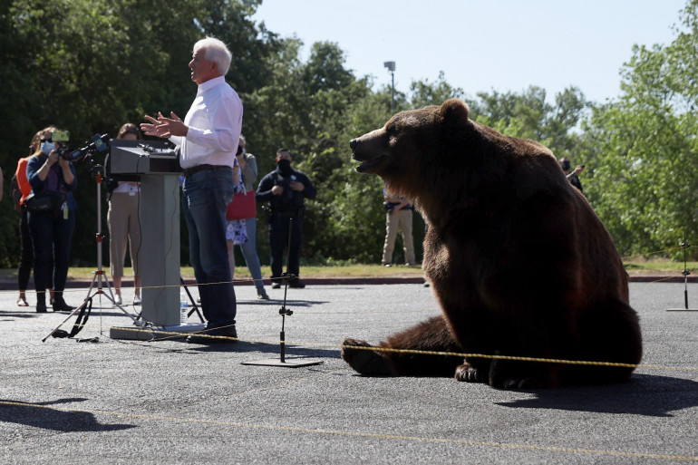 Le candidat américain John Cox et son ours Tag de 500kg, à Sacramento le 4 mai 2021