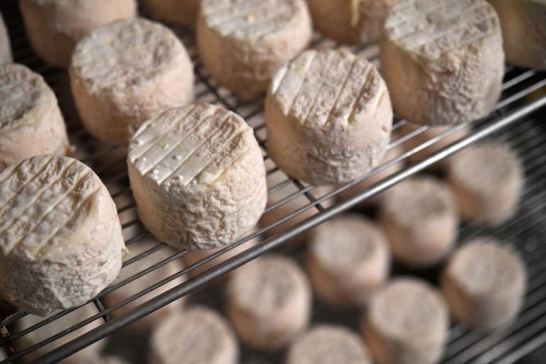 Des fromages de chèvre (illustration)