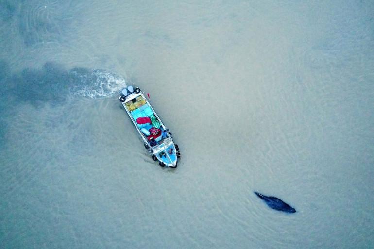 Illustration d'une baleine et d'un bateau au large de la Chine en 2017