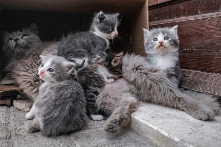 Des chatons entourant leur mère. (illustration)