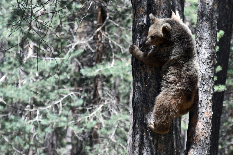 Un ours. Photo d'illustration.
