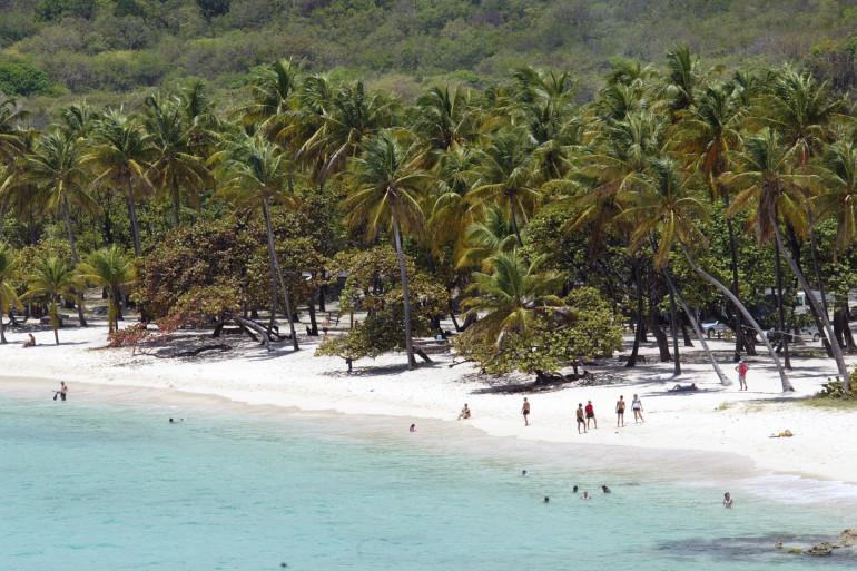 Des cocotiers sur une plage de Guadeloupe