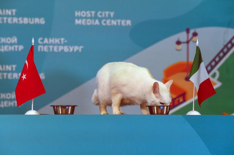 Achille, un chat sourd, est parvenu à pronostiquer le vainqueur de deux matchs à l'Euro