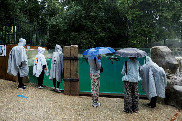 Des visiteurs du Zoo de Beauval sous la pluie le 13 juillet 2021 (illustration).