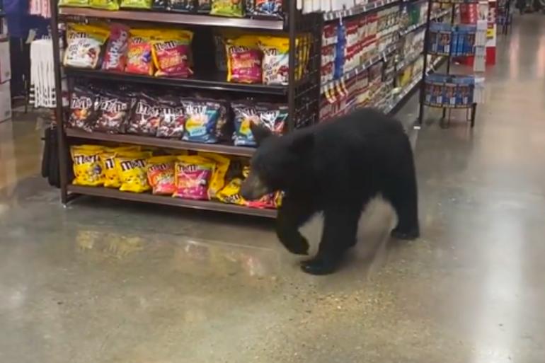 Un ours s'est promené dans un supermarché de Californie, sans causer aucun dégât.