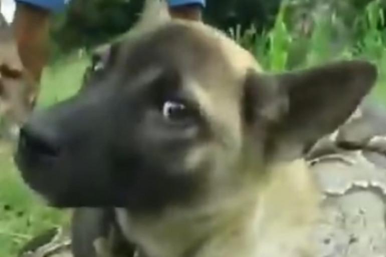 Exemple de vidéo mettant en scène un faux sauvetage de chien étouffé par un seprent