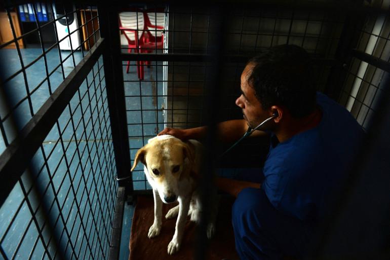 Un chien de l'association Nowzad à Kaboul avec un vétérinaire (illustration).