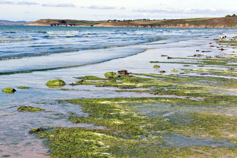 Une marée d'algues vertes à Plonevez-Porzay (Finistère), en 2010 (Photo d'illustration).