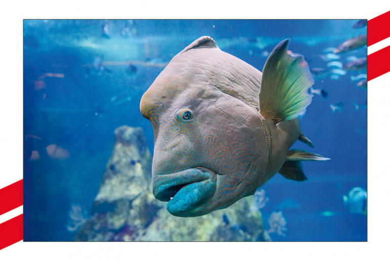 aquariumsite