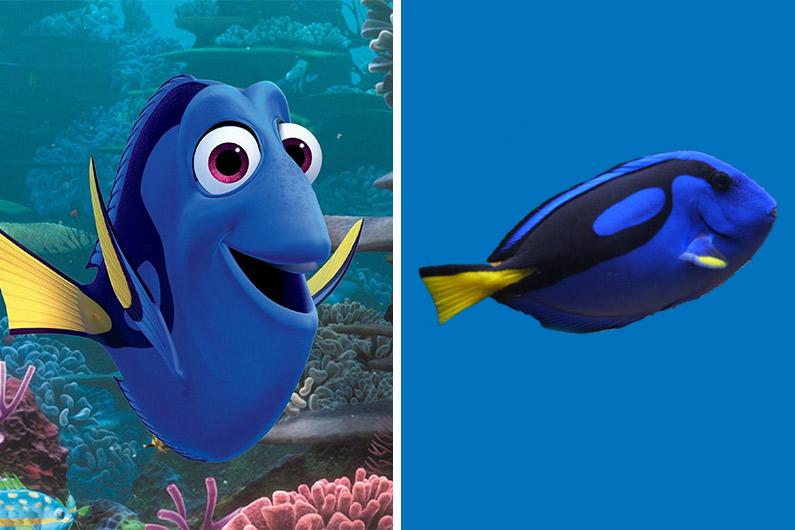 Dory, le personnage central du dernier Pixar, est en fait un chirurgien bleu.