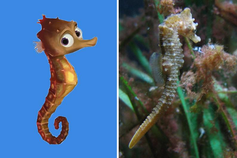 Hippo, comme son nom l'indique, est un petit hippocampe.