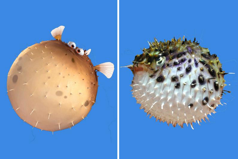 Boule, le poisson qui se hérisse de pics dès qu'il est en colère, porte en réalité le nom de poisson-globe.