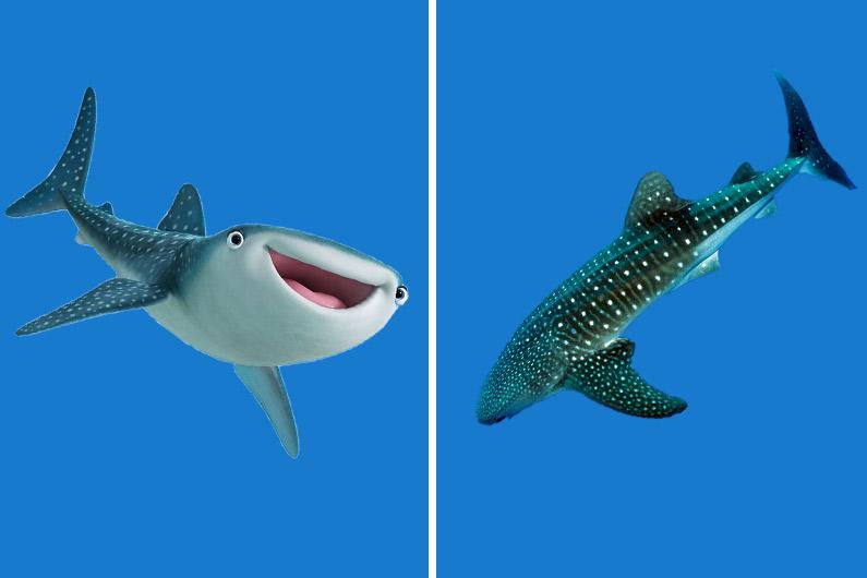Destinée, le requin-baleine, est un nouveau personnage du Monde de Dory