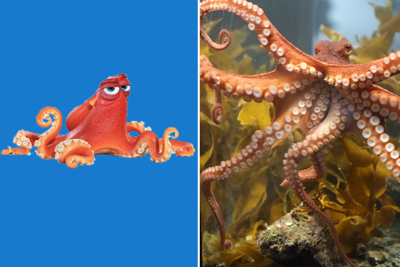 Hank, la pieuvre, est l'un des personnages principaux du Monde de Dory