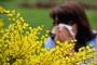 Alerte aux pollens dans plusieurs départements
