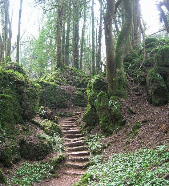 La forêt a inspiré de nombreux cinéastes