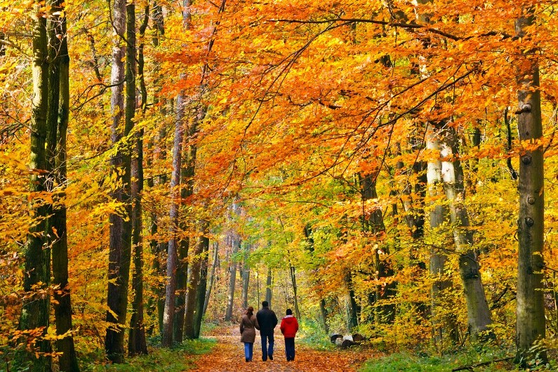 Septembre, l'automne s'installe.