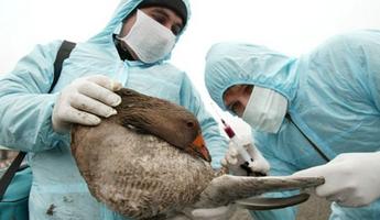 Les cas de grippe aviaire inquiètent les marchés à l'étranger.