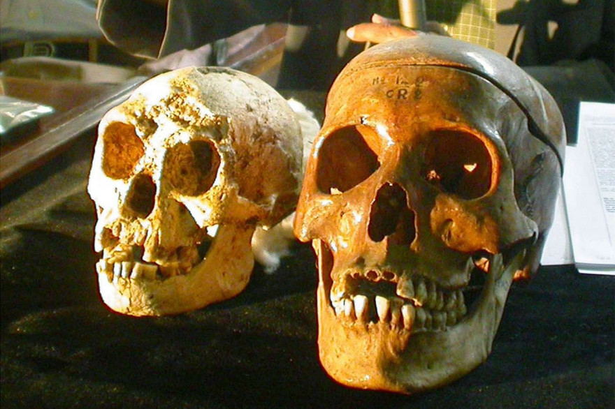 Le crâne d'Homo floresiensis à gauche lors de sa découverte à Yogyakarta (Indonésie)